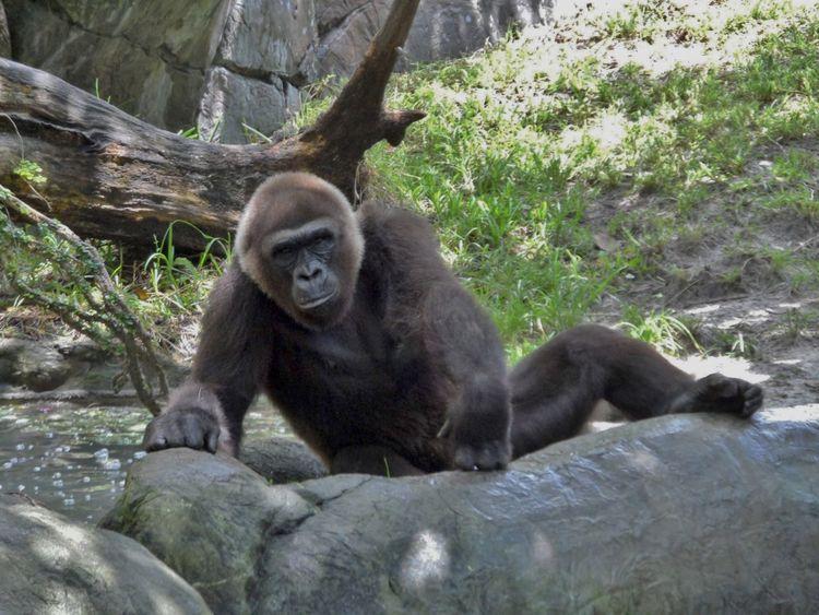Animal Themes Monkeys Monkey Business Monos Primate Sitting Zoo Animals  Zoo Animals  Zoophotography Animal Wildlife Zoo Animals
