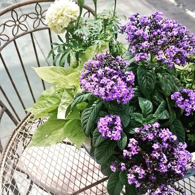 Time to relax, Dewaynes Flowers Smithfield NC