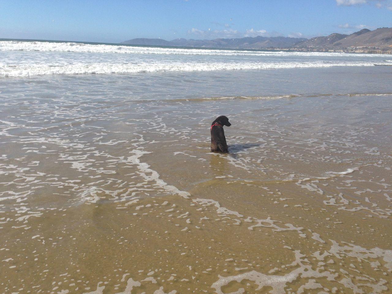Outdoors Tranquility Labrador My Baby Girl Pismo Beach Ocean View Dog Animal