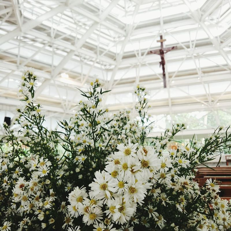 Flower Plant Church Church Architecture Trusses Fillflash Bokeh Photography Bokeh Bokeheffect First Eyeem Photo