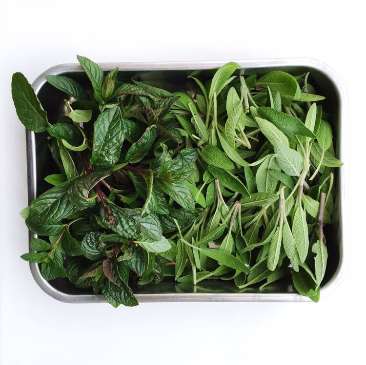 Herbs Green Color Freshness Directly Above No People Indoors  Day Salbei Sage Menta Minze Nana