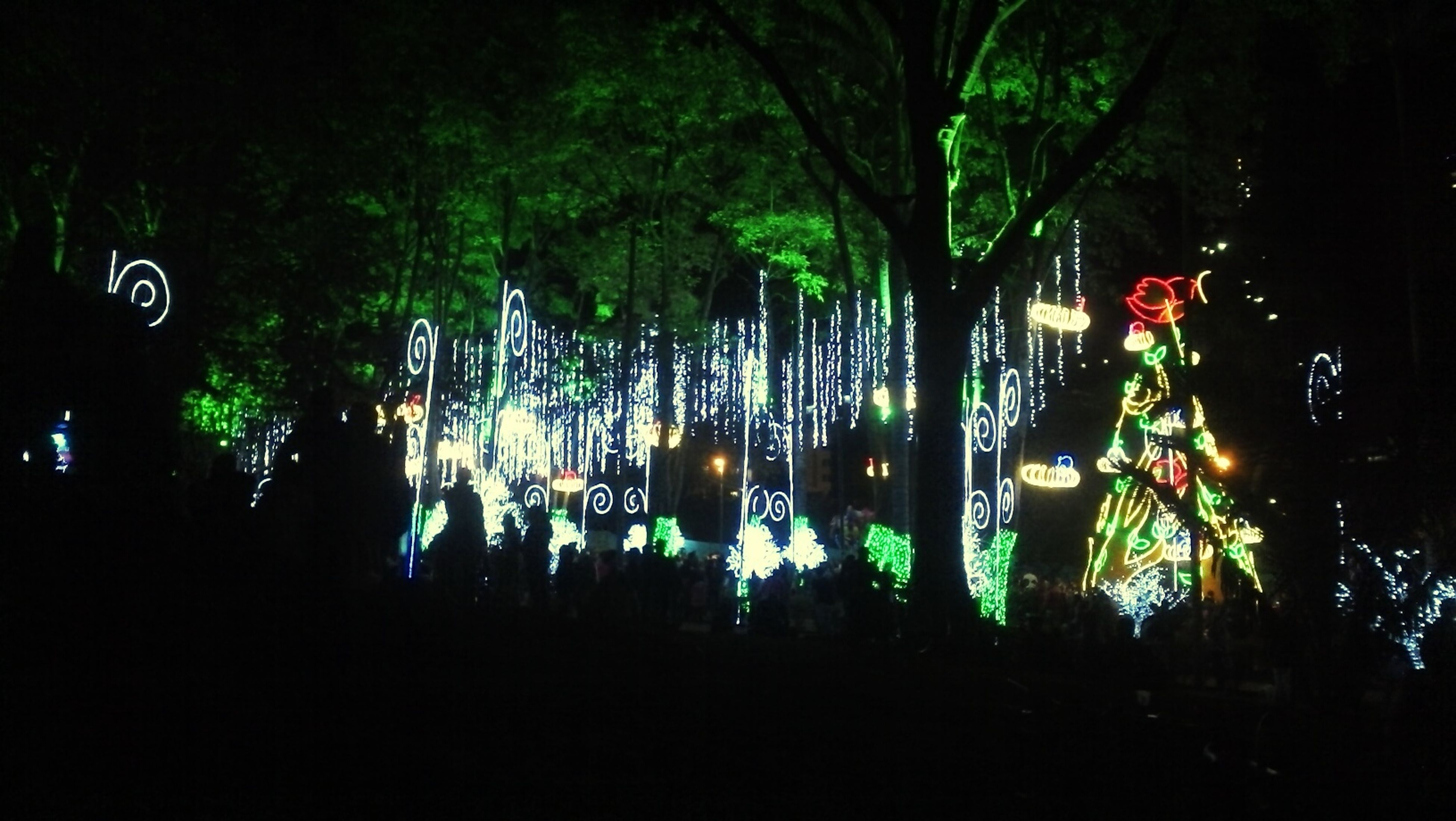 tree, large group of people, night, illuminated, growth, nature, outdoors, park - man made space, tranquility, lighting equipment, silhouette, celebration, beauty in nature, tree trunk, street light, in a row, hanging, men