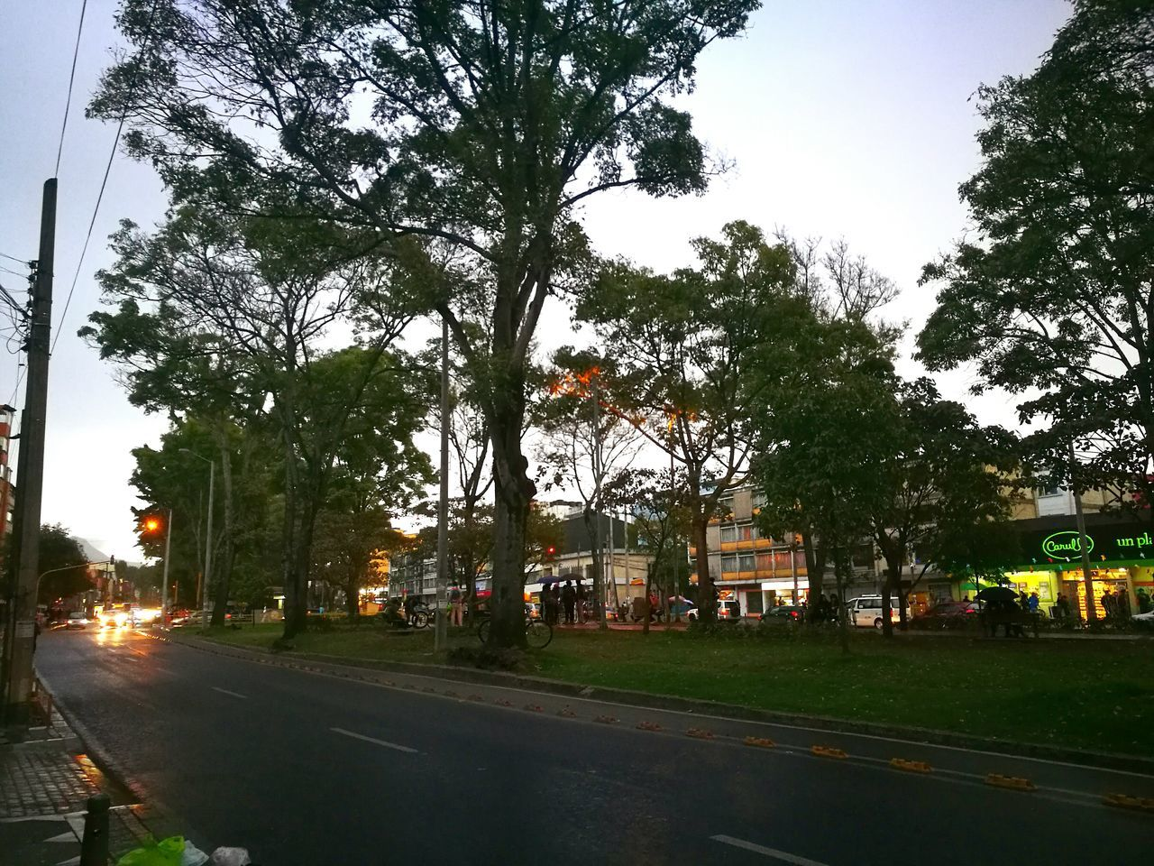 tree, car, road, transportation, outdoors, sky, built structure, growth, land vehicle, building exterior, no people, day, nature, architecture, city, grass, illuminated