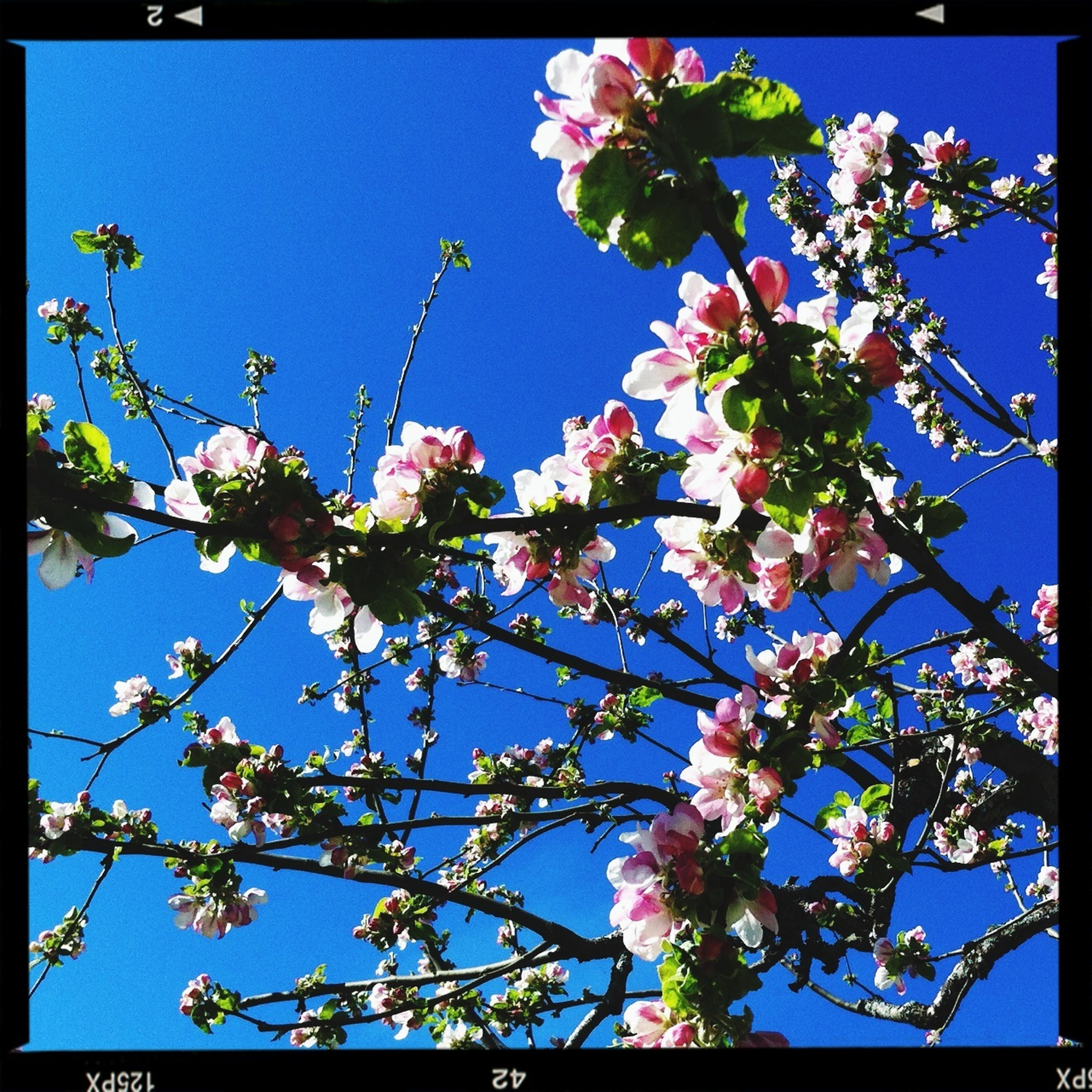 flower, low angle view, freshness, growth, branch, tree, transfer print, clear sky, beauty in nature, fragility, blue, nature, blossom, auto post production filter, sky, blooming, in bloom, sunlight, petal, day