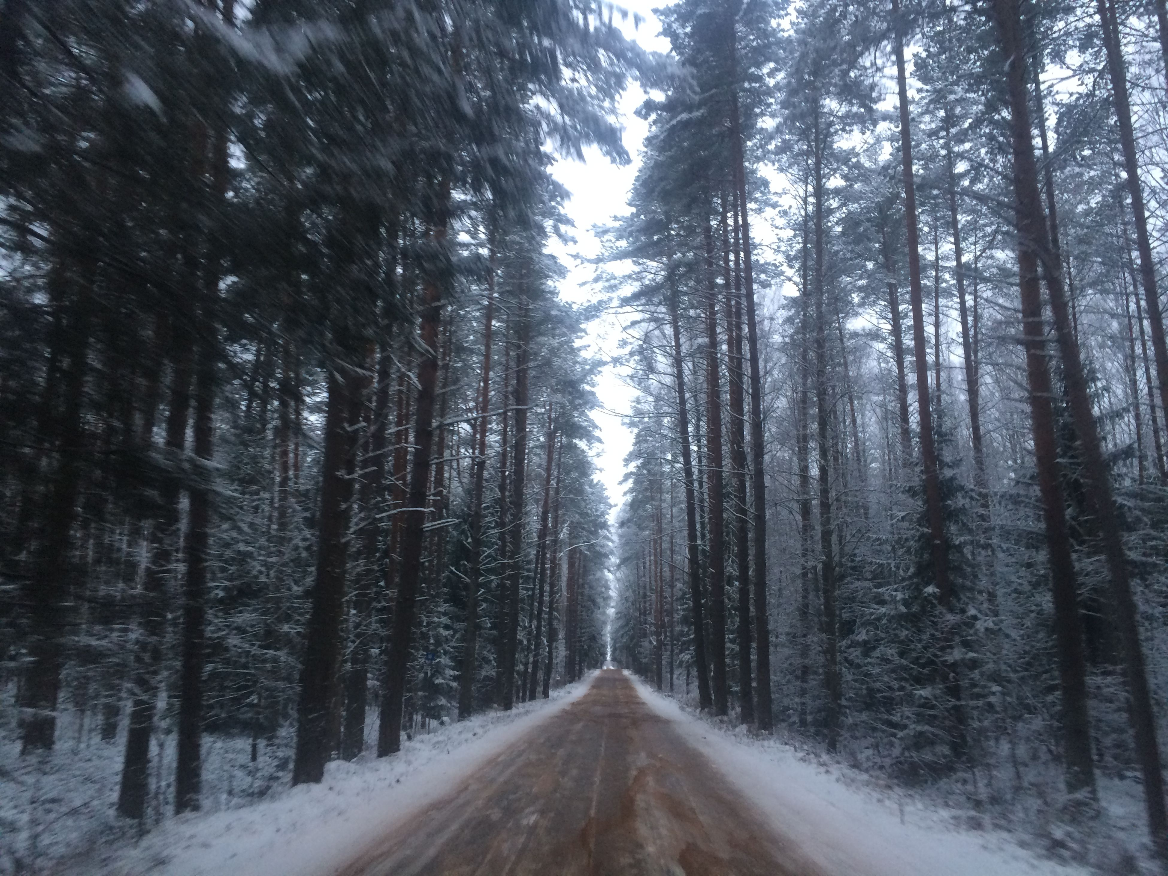 the way forward, tree, diminishing perspective, vanishing point, forest, road, snow, tranquility, winter, nature, transportation, tranquil scene, cold temperature, empty road, woodland, beauty in nature, tree trunk, growth, scenics, non-urban scene