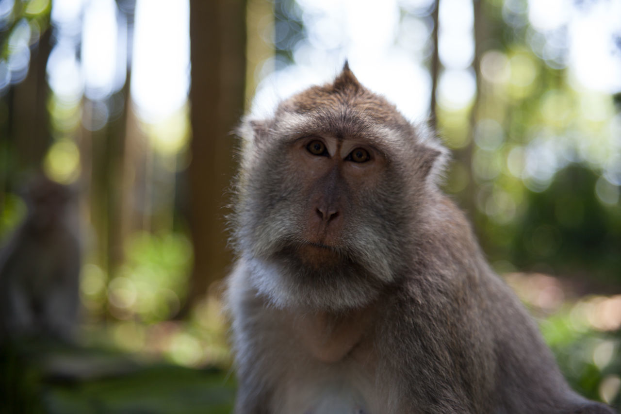 monkey, focus on foreground, animals in the wild, animal wildlife, animal themes, one animal, mammal, day, outdoors, nature, close-up, no people, portrait