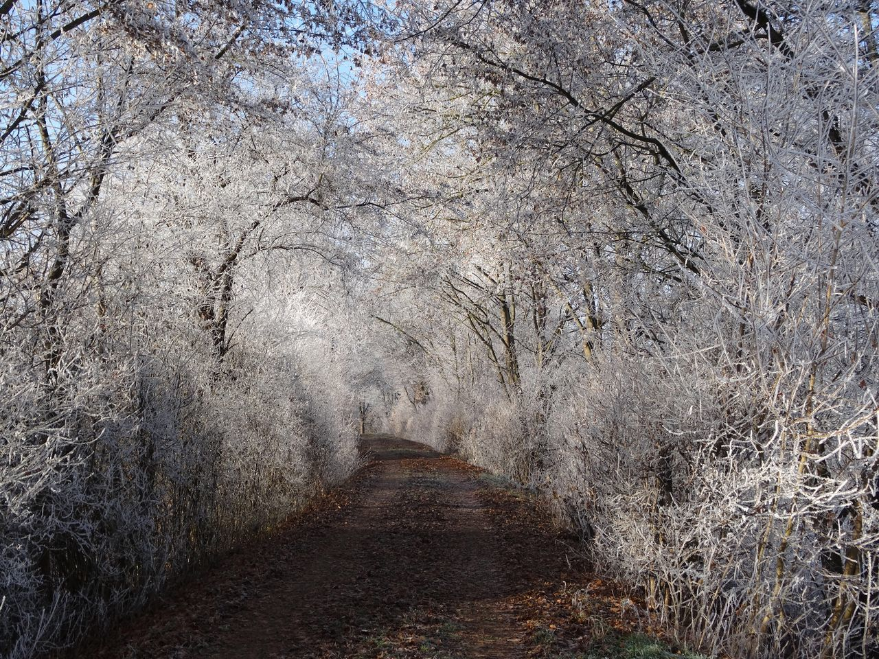 The Way Forward Tree Nature Tranquility No People Outdoors Day Snow White Frost Winter Wonderland Cold Temperature Germany