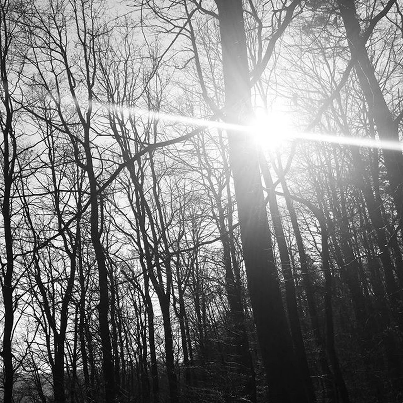 Outdoors Palatinateforest Pfälzerwald Pfalz Beautifulday Offtrack Nature Forest Hiking Artbynature Beautifulnature Winterisalmostover Bw Blackandwhite Baw Sun Sunbeam Sunlight