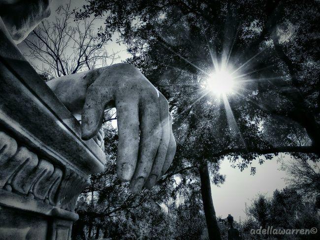 Cemetery Wanderings Cemetery Photography Graveyard_dead Graveyard Beauty Graveyard Houston Texas Houston Sunlight Sunbeam