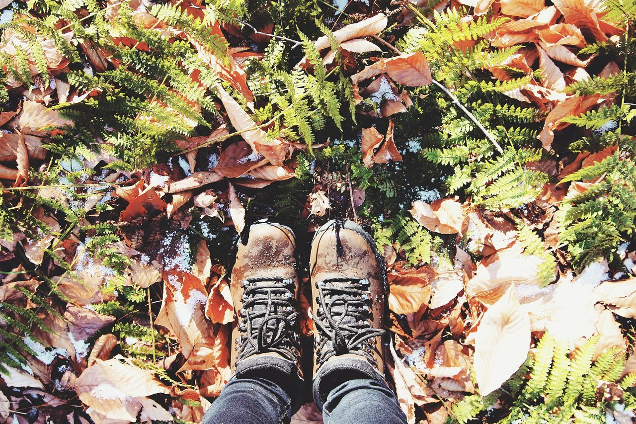 Snow kissed ferns. Personal Perspective Growth Lifestyles Standing Leisure Activity Leaf Outdoors Day Tree Women Close-up Nature Mountainvibes The Way Forward Hike Adventure Fall Vermont Scenics Beauty In Nature Tranquil Scene Idyllic