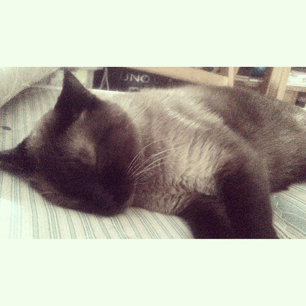 Despertar sentir un bulto extraño lado. <3 100happydays Day6 Amoamigato Sleepingcat días mañanadejueves
