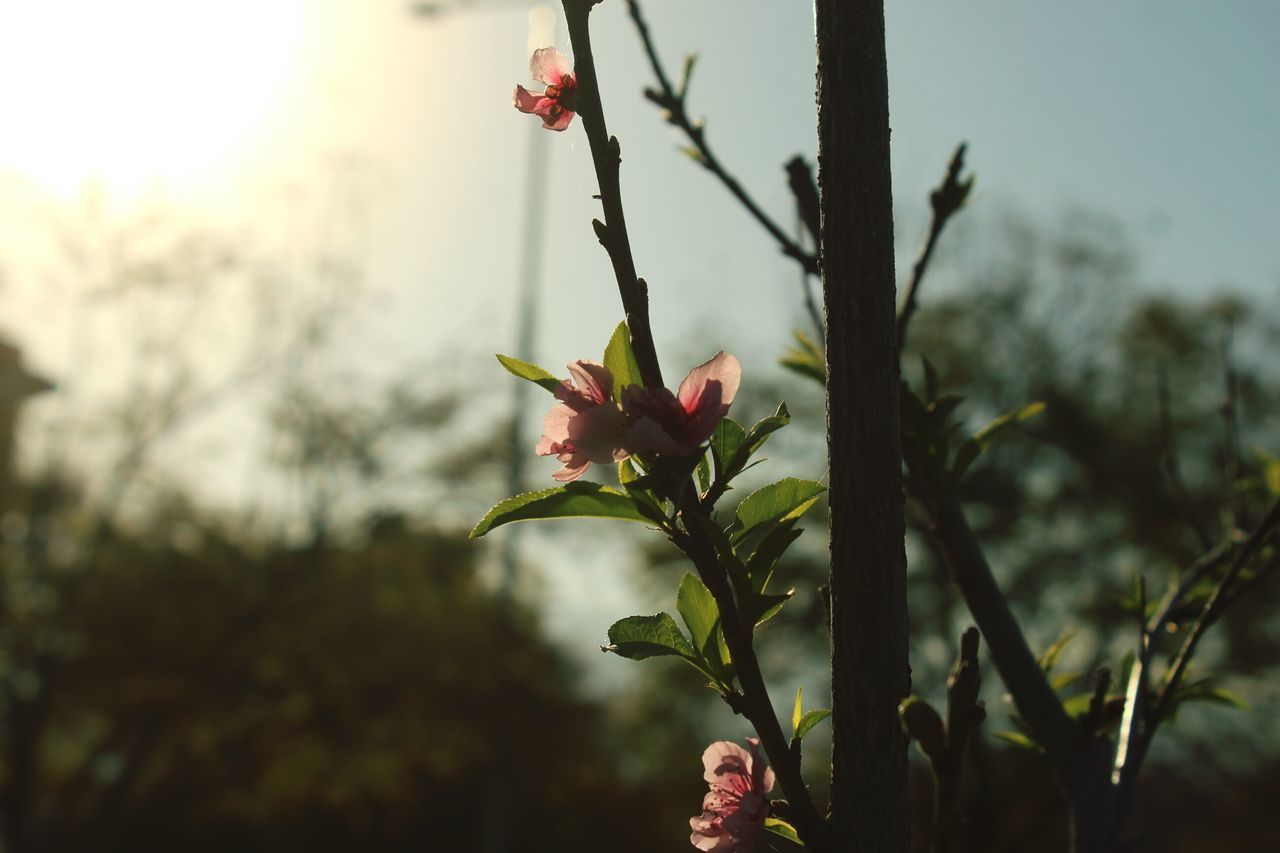 Crece! Flower Crecer Vida Life Plants 🌱 Details Flowerporn Canonphotography University Universo