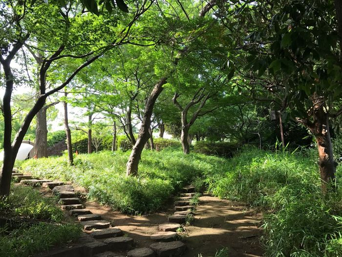 Tree Nature Growth Outdoors Forest Landscape No People Beauty In Nature Day Branch