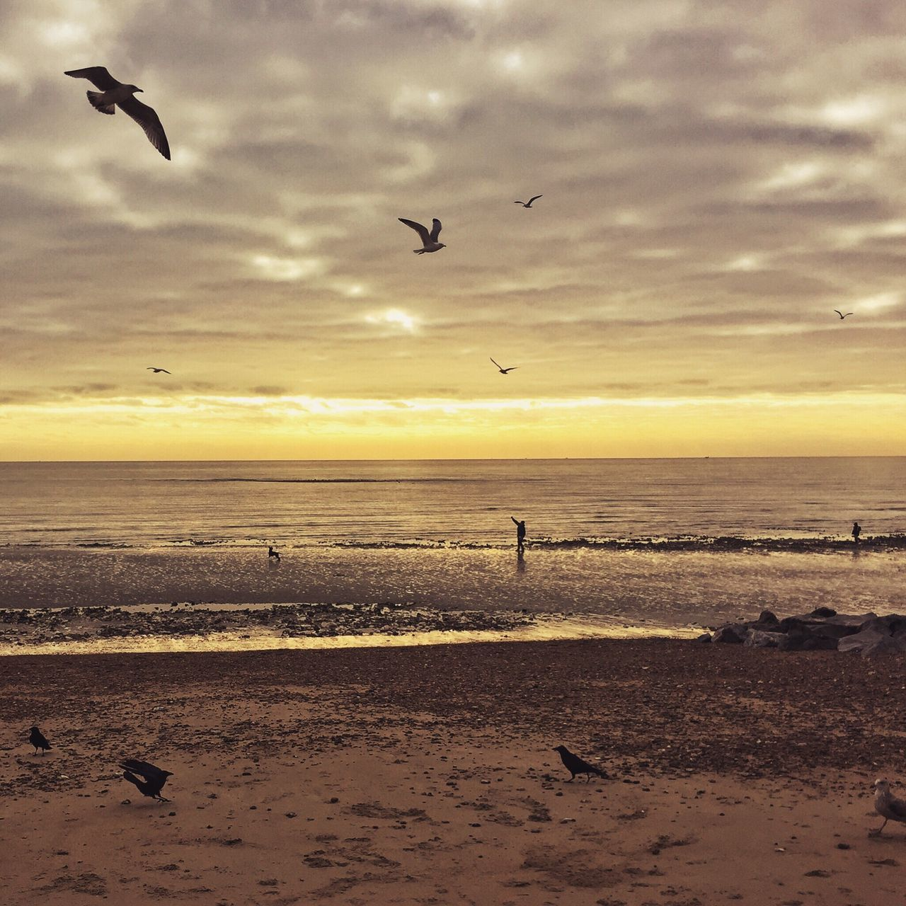 Beach Birds Ocean Afterlightapp IPhoneography Rustington