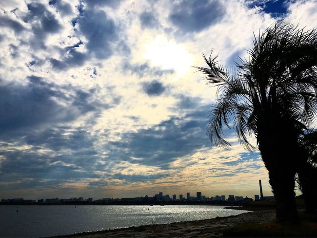 The Great Outdoors - 2016 EyeEm Awards Japan Tokyo Bay Relaxing Moments Sea And Sky Sky And Clouds Clouds And Sun Palm Tree