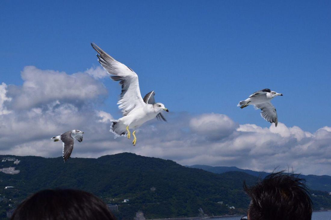 Bird Flying Sky Sea 初島 Hatsushima Atami In Japan
