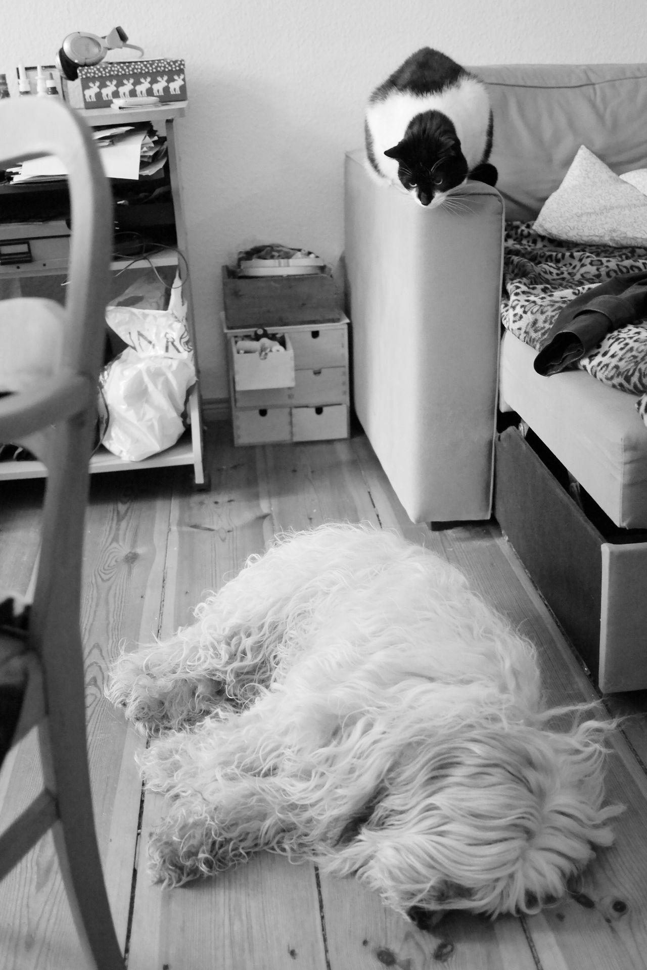 Who Is That Guy Anyway? Cat Cats Dog Dogs no Communication Sceptical Sceptic Cat Sleeping Sleeping Dog Sleeping Beauty Relaxing Relaxing Time Relaxing Moments Indoors  My Point Of View From My Point Of View Monochrome Photography