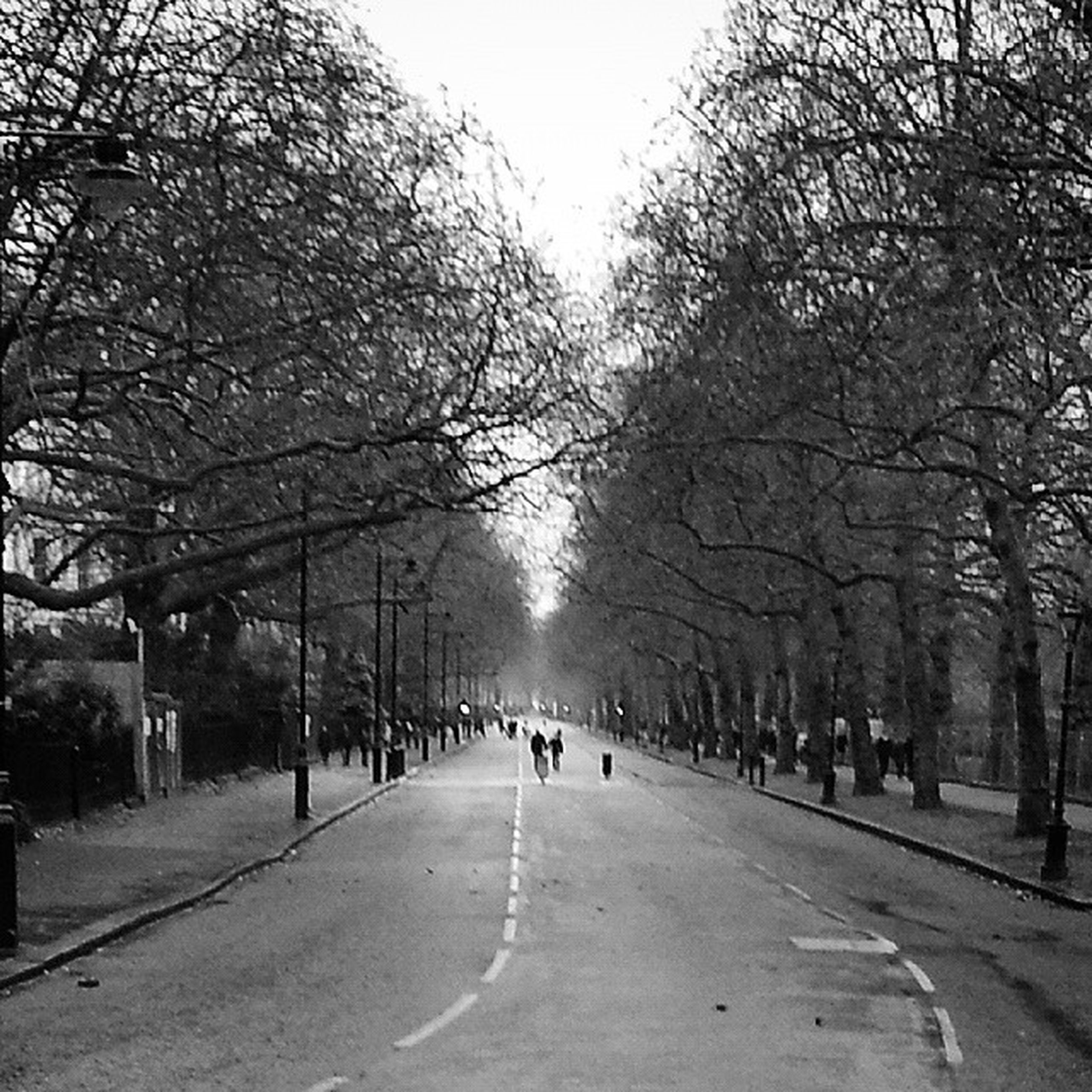 tree, the way forward, treelined, street, diminishing perspective, road, walking, transportation, bare tree, men, vanishing point, person, lifestyles, large group of people, city, city life, leisure activity, group of people, branch