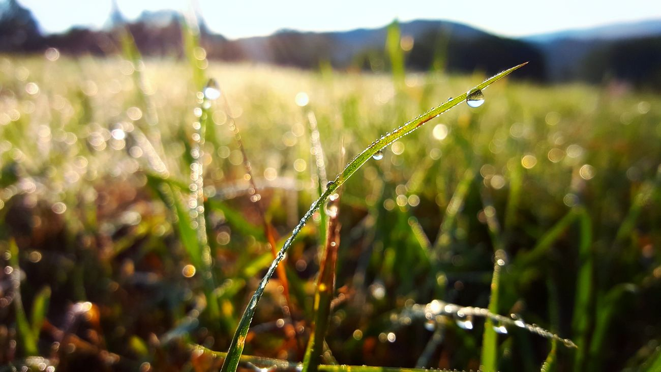 Beauty In Nature Close-up Day Dew Drops Of Water Fragility Grass Growth Holiday Landscape Morning Nature No People Outdoors Plant Poland Summer Water