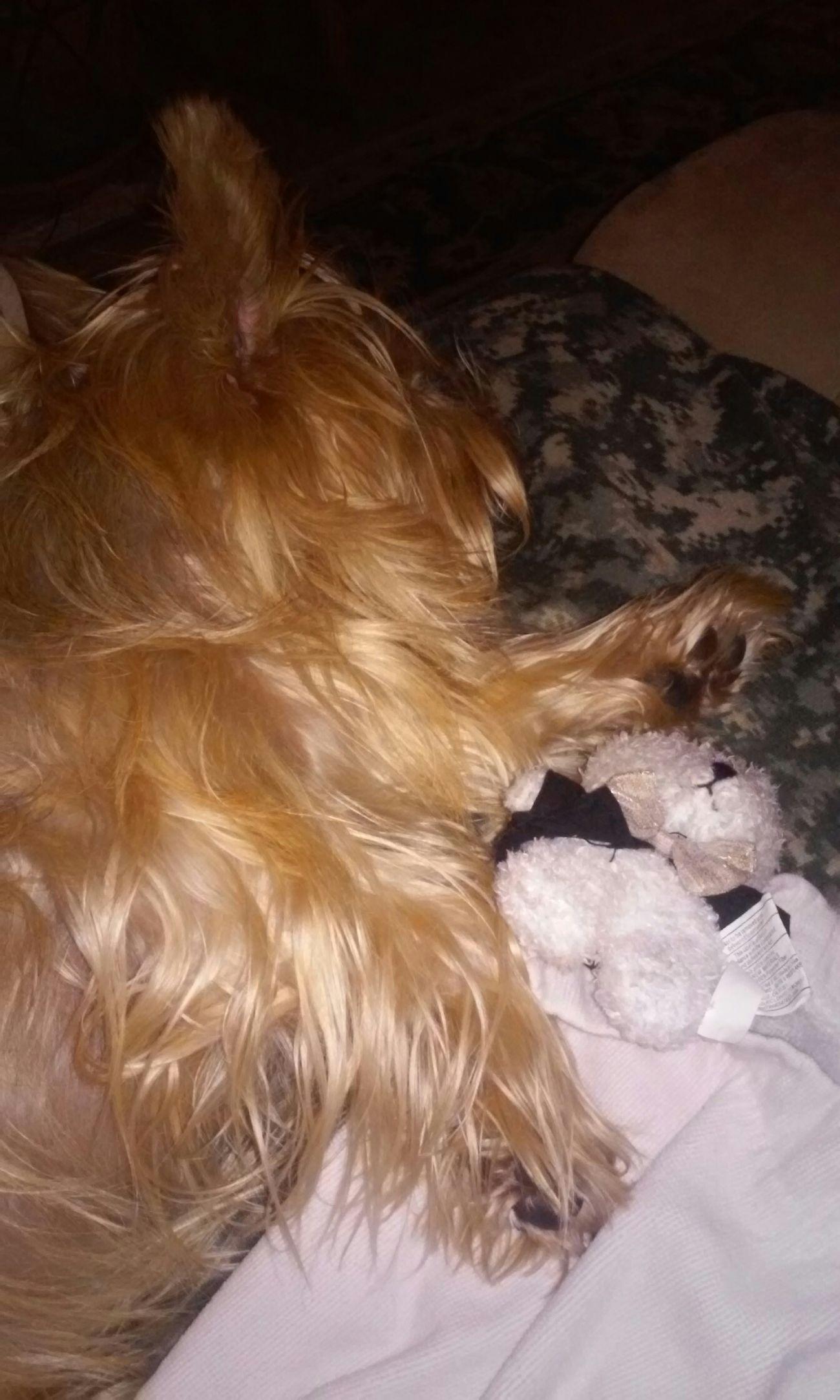 Quinn finally fell asleep Cute Pets