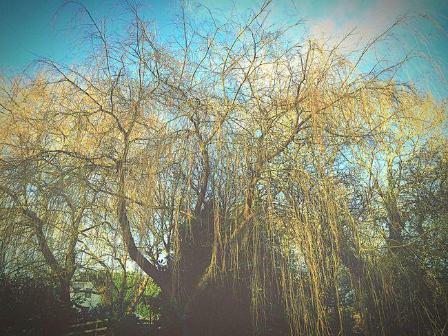 Tree Canal Nature Wildlife Sunnyday