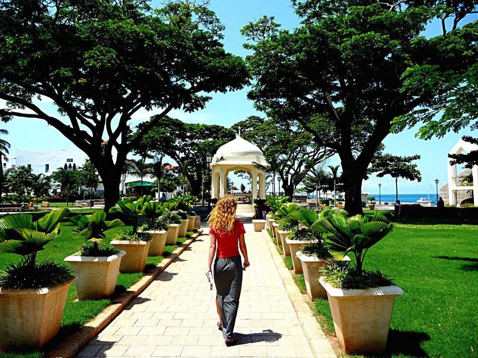 Zanzibar_Tanzania Stonetown Tanzania Zanzibar Zanzibar🏊🏄🎣 Garden Flowers,Plants & Garden Africa Walk This Way Walking Around