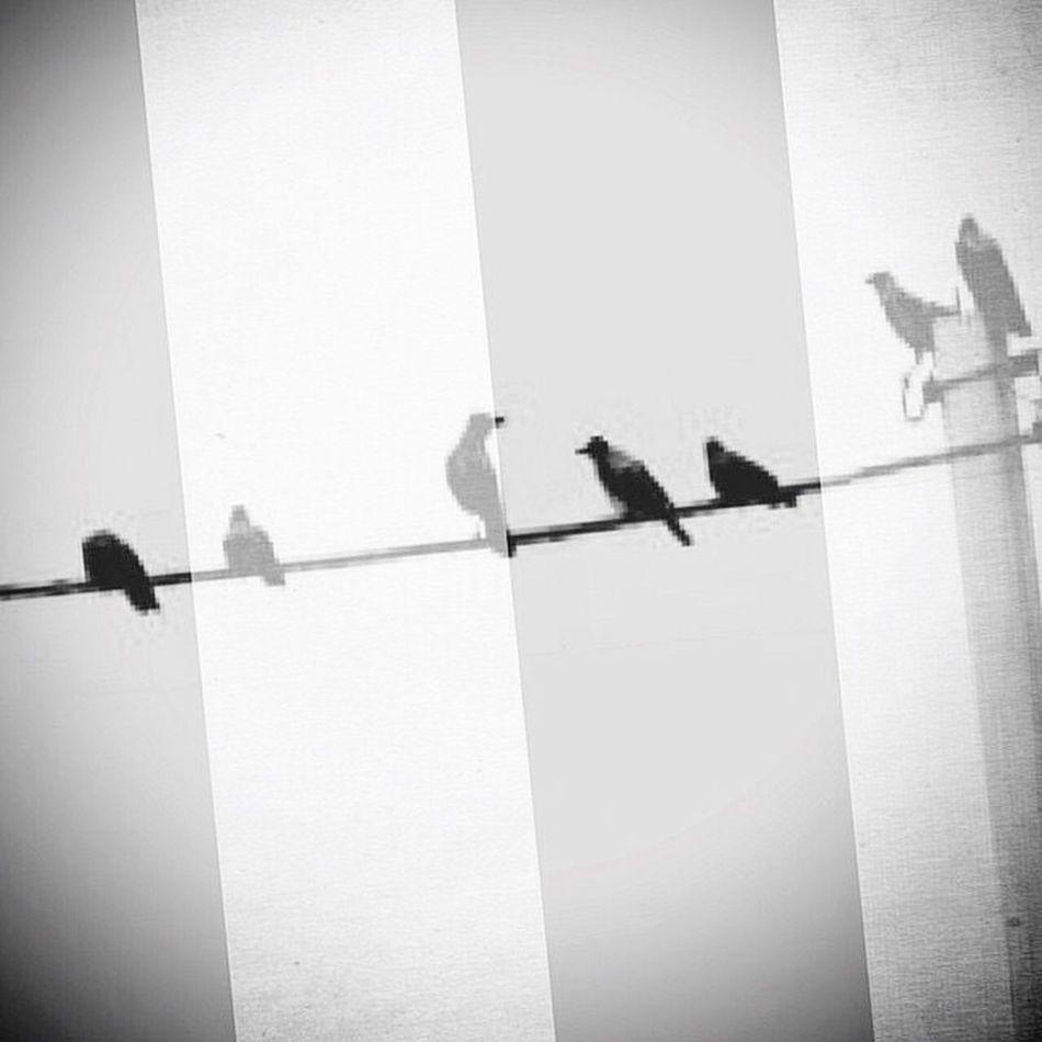 Cuervos Cuervo Crows Crow Cuerda Rope Cielo Sky B&w