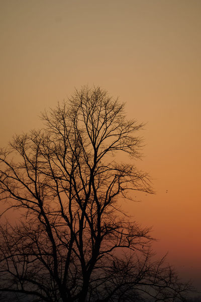 Sunset Tree Branch Nature Beauty In Nature Silhouette Bare Tree Sky Dramatic Sky Tranquility Orange Sky Perspectives On Nature