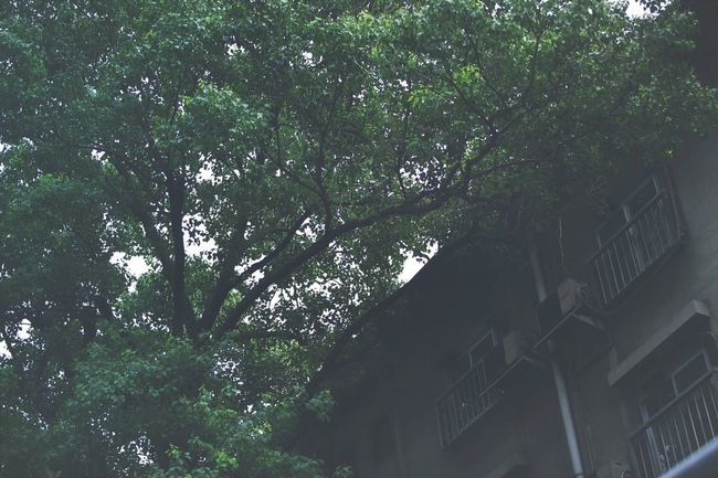 Streetphotography Trees