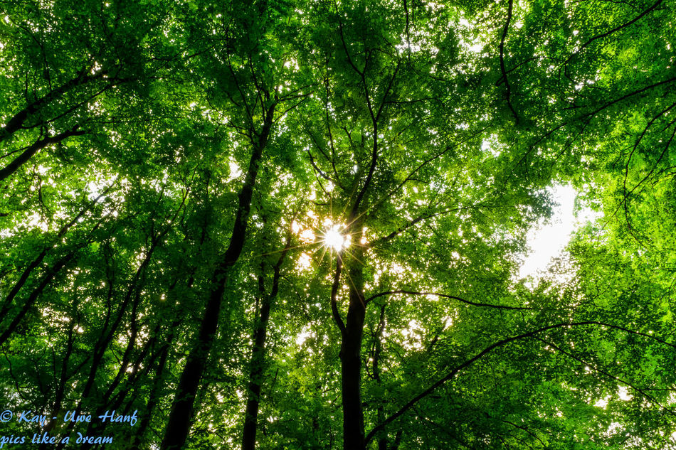 Beauty In Nature Day Forest Forrest Forrest Nature Forrest Photography Forrest Views Green Color Growth Nature Nikon Nikon D5500 Nikonphotography No People Outdoors Sun In The Forest Sun In The Forrest Tranquility Tree Tree Trunk