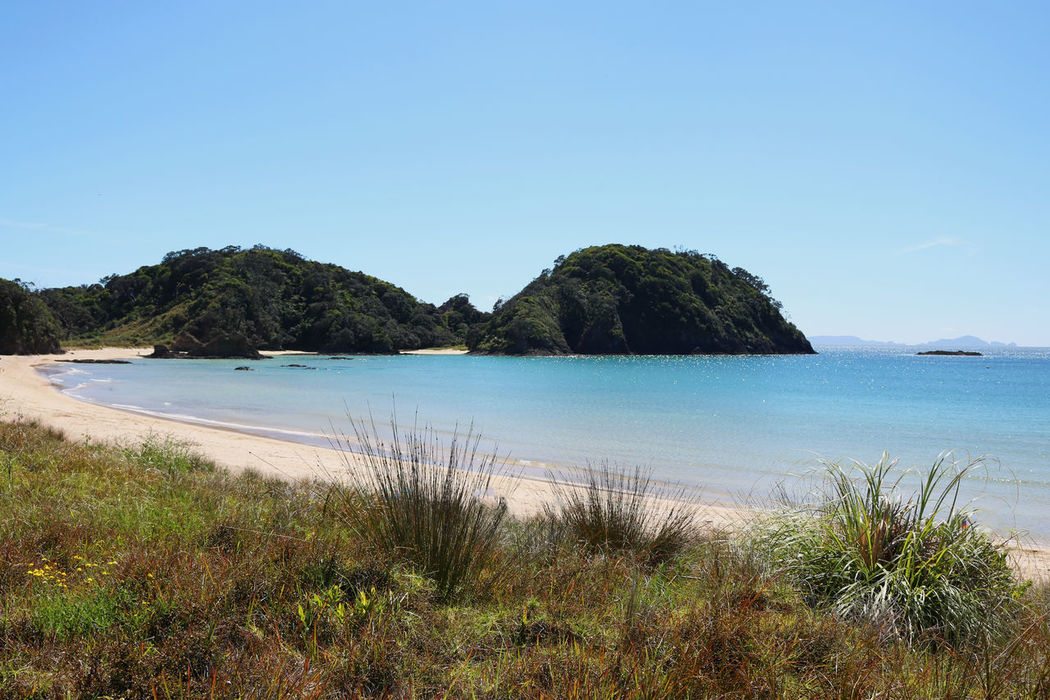 A beautiful shot of a white sandy beach at Tutukaka Coast overlooking the Pacific Ocean. Beach Blue Clear Sky Day Growth Horizontal Landscape Matapouri Bay Nature Outdoors Sand Scenics Sea Sky Sunny Tourism Tranquil Scene Tranquility Tree Tutukaka Coast Vacations Water
