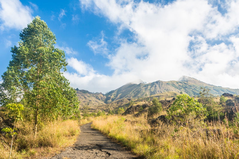 On the hiking path leading to the summit of the Batur volcano near the village of Kintamani in Bali, Indonesia ASIA Bali Batur Beauty In Nature Cloud - Sky Day Grass Growth INDONESIA Landscape Mountain Nature No People Non-urban Scene Outdoors Road Rural Scene Scenics Sky The Way Forward Tranquil Scene Tranquility Travel Tree Volcano