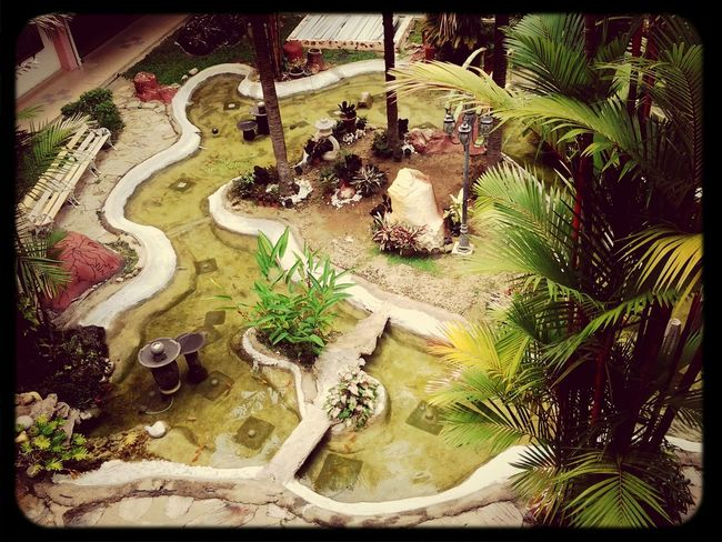 this is the pond where i spent my time watching the fish and plants...