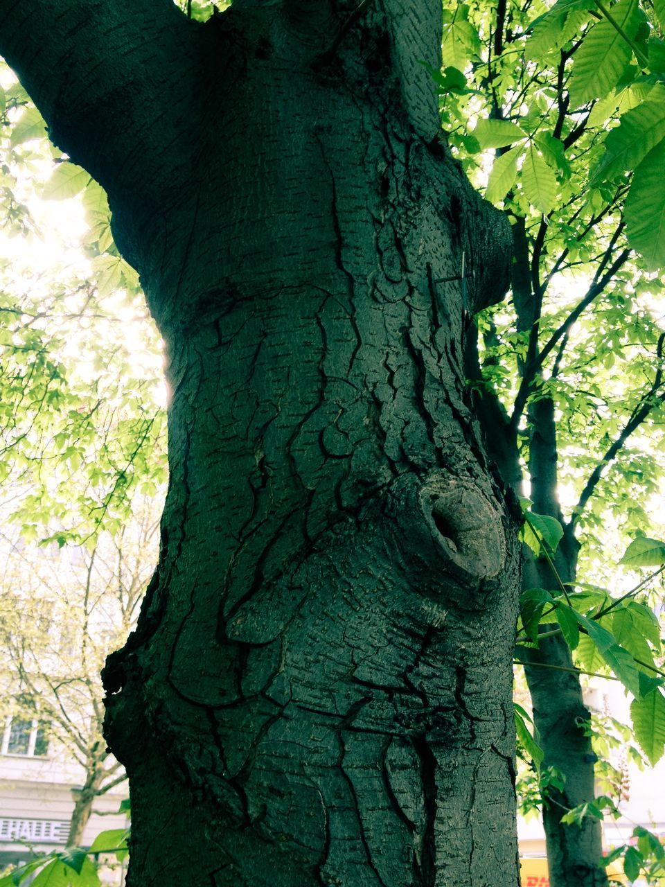 tree trunk, tree, nature, day, growth, outdoors, branch, no people, forest, bark, close-up, beauty in nature