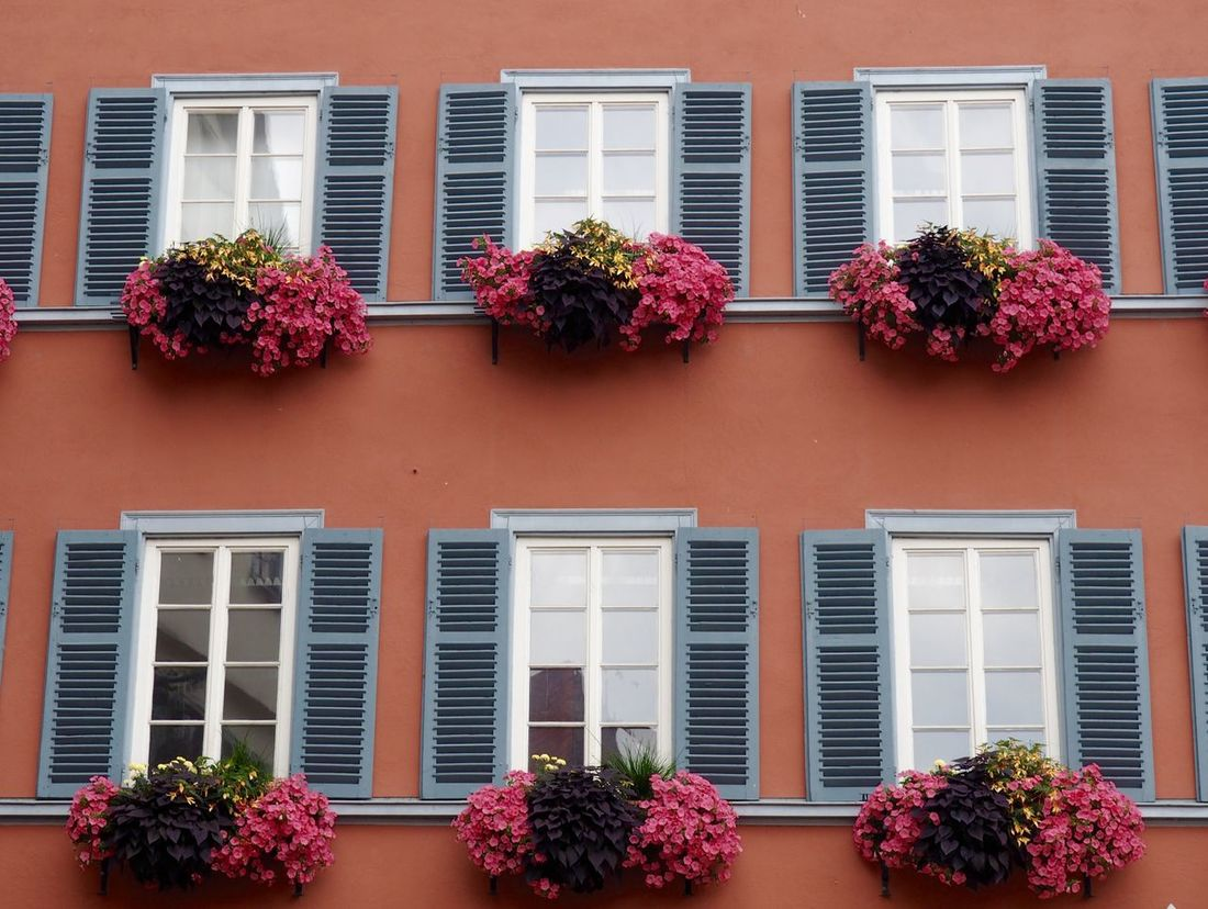 Home Colour Of Life Architecture Blossom Building Building Exterior Built Structure City Façade Flower Freshness Growth Historic No People Old Germany Residential Building Residential Structure Swabian Traditional Window