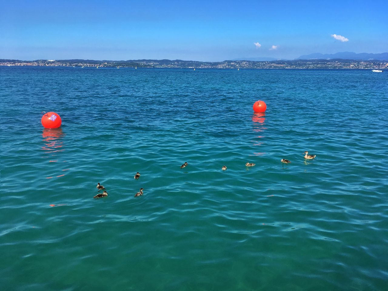 water, buoy, nature, animals in the wild, sea, beauty in nature, waterfront, bird, floating on water, blue, day, outdoors, animal themes, no people, scenics, animal wildlife, flying, sky, swimming, flamingo, swan