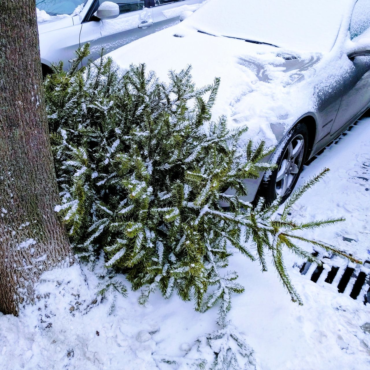 Car Tree Snow Winter Transportation Land Vehicle Cold Temperature No People Day Nature Outdoors Close-up Xmas Tree Xmas🎄 Xmas Is Over Winter Wonderland Wintertime