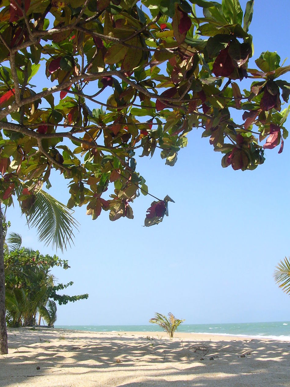 Allalone Beach Beauty In Nature Branch Day Growth Horizon Over Water Leaf Nature No People Ocean View Outdoors Perfectspot Scenics Sea Sky Thailand Tranquil Scene Tranquility Tree Vacation Water Secret Places Hideaway No Tourists