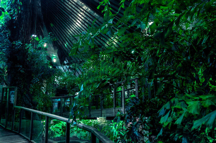 Beauty In Nature Forest Garden Green Color House Indoors  Jungle Nature Plants Teal Tree Trees The Great Outdoors - 2017 EyeEm Awards