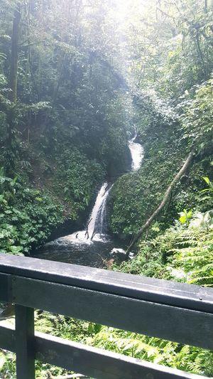 Caída de agua Costa Rica Bosque Nuboso