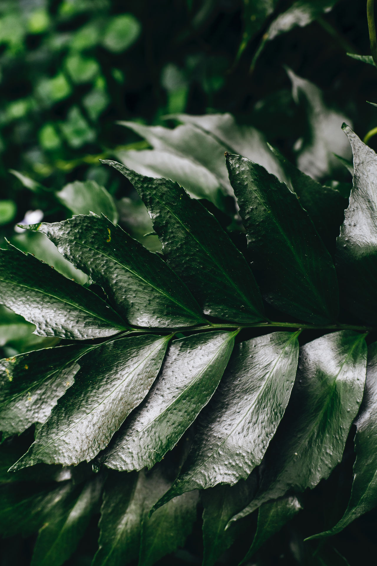 Freshest freshness Backgrounds Close-up Day EyeEm Nature Lover Food Food And Drink Freshness Green Color Growth Healthy Eating Leaf Nature No People Outdoors Plant Vegetable