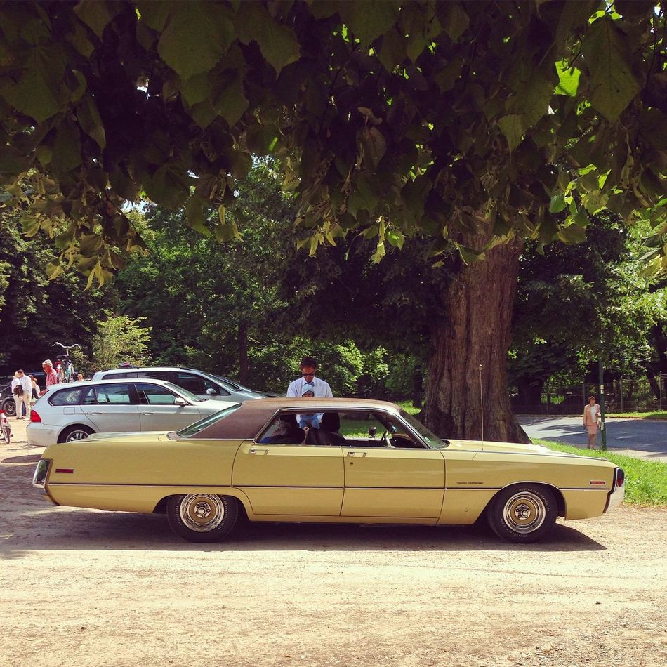 American Cars Cabrio Cadillac Car Carspotting Chevrolet Classic Car Convertible Day Limousine Mode Of Transport No People Oldtimer Outdoors Police Car Summer Transportation Tree Tree US Cars Vehicle Breakdown Vintage Cars Wedding Car Wedding Day Yellow Car