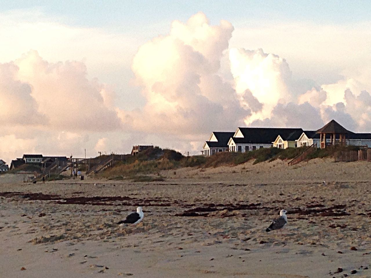 Big clouds and birds. OBX14 Birds Clouds Beach