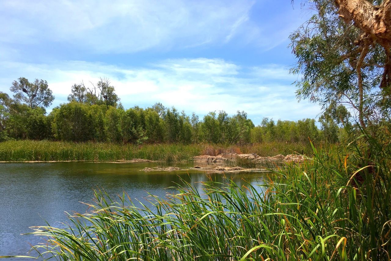 nature, sky, tree, tranquil scene, scenics, lake, tranquility, beauty in nature, water, grass, growth, outdoors, no people, forest, landscape, plant, day, adventure