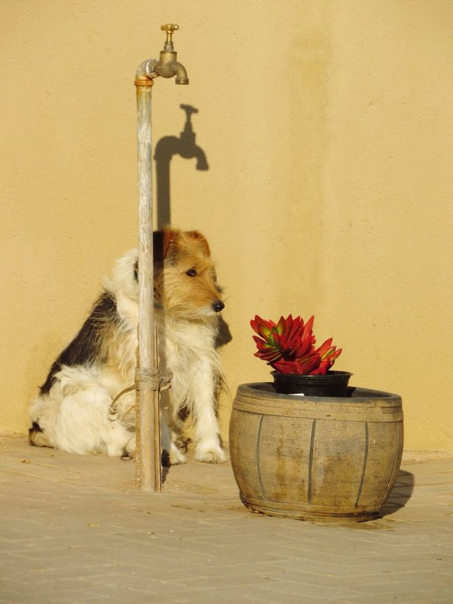 Pets One Animal Domestic Animals No People Flower Animal Themes Wall - Building Feature Water Tap Sitting In The Sun Dog Contentment First Eyeem Photo Plants Succulent EyeEm Best Shots EyeEm Gallery EyeEmBestPics