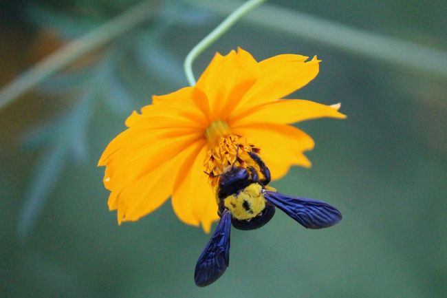 Yellow Flower Awesome_nature_shots Nature Photography Nature_collection Flowers Flower Photography NiceShot Happy To  Capture The Moment Bugs Life Bug #insects #butterfly #pretty Bugs! Bugslife Yikes! Photography Bugs