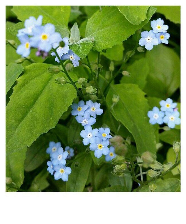 Photo Des Fleurs Blue
