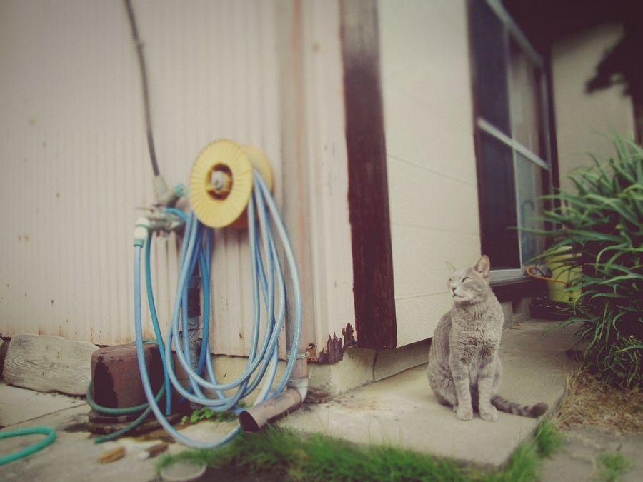 名もない野良猫です。 cat lovers My Birthplace Country Life Cool!!