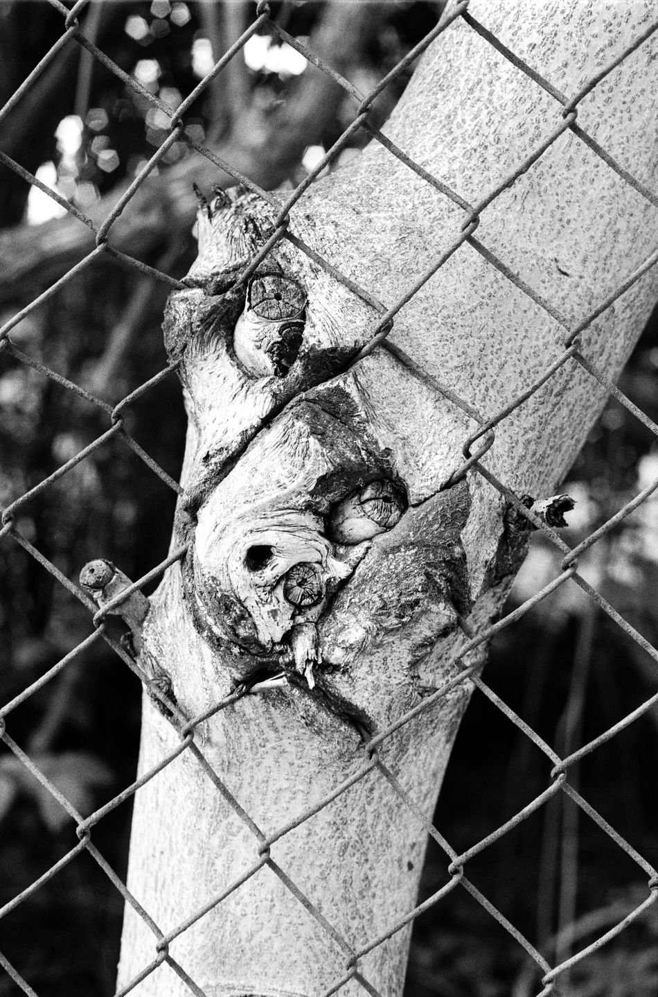 Location: Dr.-Kahlbaum-Allee Canon A-1   APX 100 -> 200   D-76 AgfaPhoto APX 100 (new) Black And White Blackandwhite Canon A-1 EyeEm Best Shots - Black + White Film Photography Kodak D-76 Monochrome