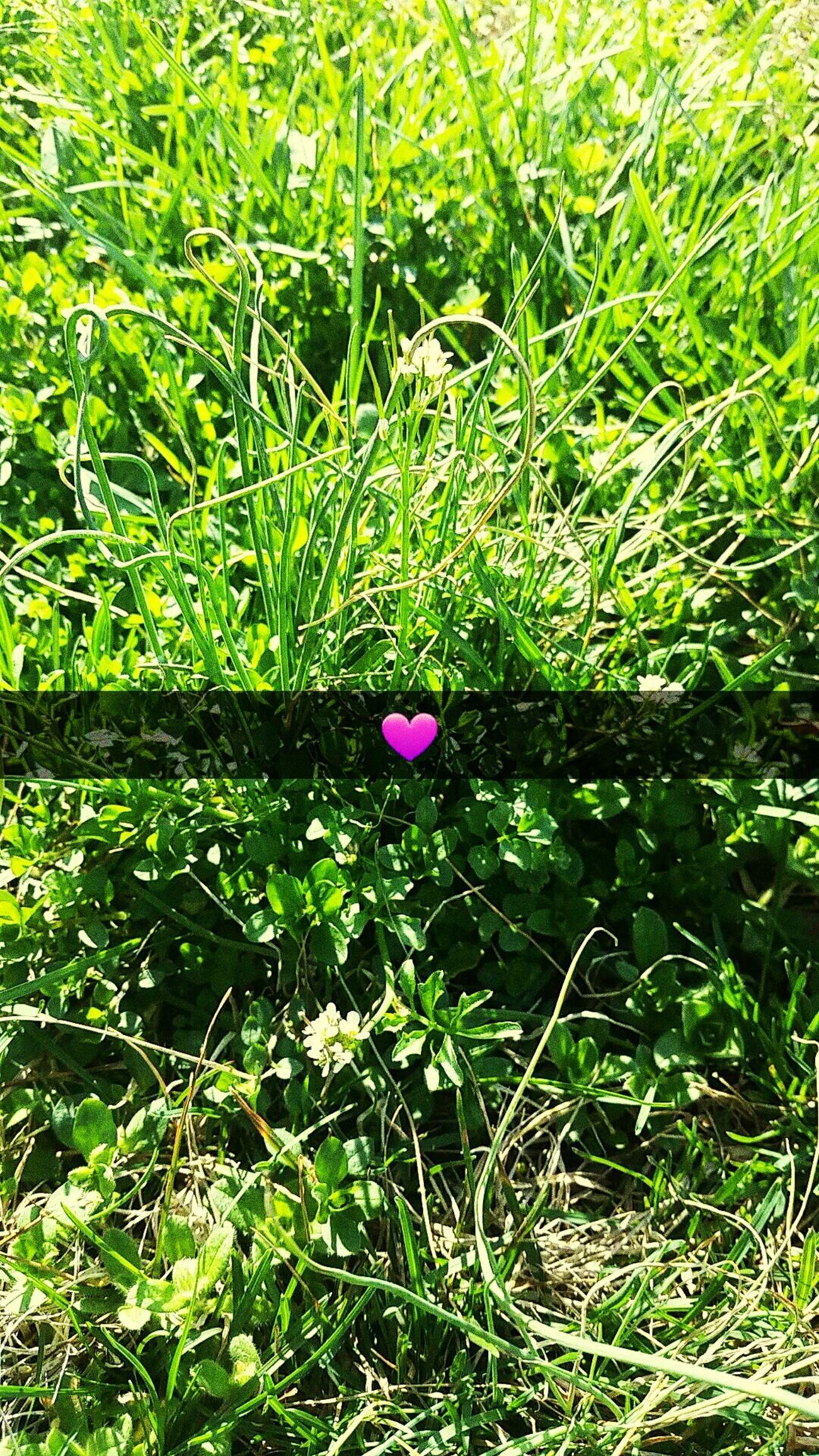 Spring Spring Grass